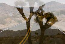 Palm Springs Fond & Found