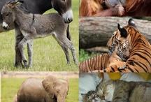 Cuccioli & mamme
