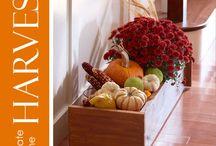 Fall Decoration Ideas / by Morgan Cassidy