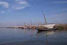 Parc Natural de l'Albufera / La Albufera, al sur de la ciudad de Valencia, es uno de los más valiosos espacios naturales mediterráneos debido a la singularidad de sus aguas dulces. En el cordón litoral que separa el lago del mar se desarrollan formaciones dunares, separadas por depresiones denominadas mallades. Parte de la restinga es la Devesa del Saler, cubierta por pino blanco con un rico sotobosque. 3 golas o canales (2 naturales y 1 artificial) comunican el lago y el marjal circundante con el mar.  http://goo.gl/vP5djl