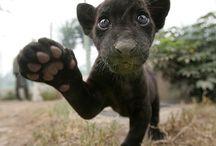 super cute:)