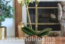 Orchids & Plants / We all need something alive in our home and offices