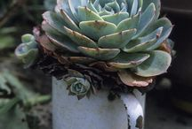 Garden Ideas: Succulent tips & care