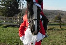 Horse fancy dress xmas