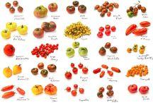 Tema tomate