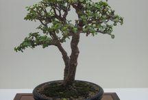 mini minicik ağaçlar :)
