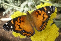 Butterflies / by Brooke Eulate