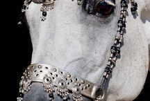 Horses - tack