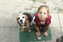 Beagle és a gazdi