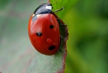 Ladybug / by Renell and Mark Cothren