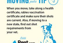 Moving Tips and Ideas / by Patricia Monk
