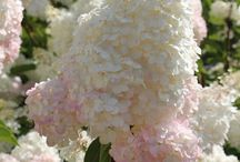 Spring Garden Inspo