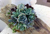 Succulent  no 2