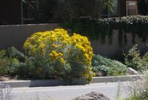 Client: Trace Residence / Traditional Front Yard Design