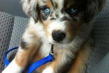 •Puppies•
