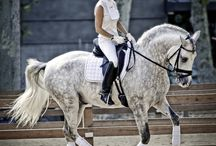The art of Equestrian