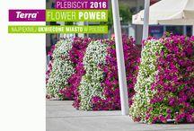 Terra Flower Power 2016 - najpiękniej ukwiecone miasto w Polsce