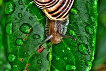 snails - such fun!