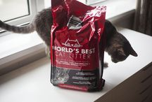 Cat Litter Reviews