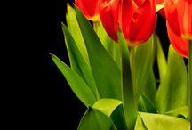 Flowers & Still Lifes
