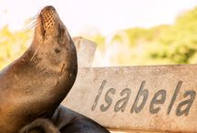 Get inspired from Natural Paradise Isabella Island, Galapagos / Isabela is the biggest Island of the Galapagos Archipelago. The island offers a variety of tourist attractions, e.g. daily tours to Las Tintoreras, the Volcanoes and los Túneles, etc. Get inspired of our natural paradise