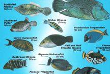 Mergulho identificação de peixes