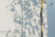 umbra copac