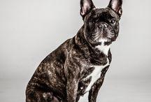 Mascotas / Fotografías de mascotas