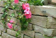 Garden: Retaining walls / by Laara Copley-Smith Garden Design