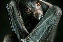 vleermuizen <3