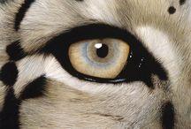 oczy i oczka
