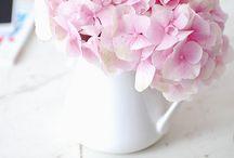 Hydrangea my love