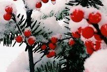 снег и цветы, ягоды