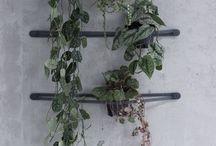Cualquier Verdura de jardín