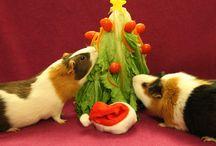 Vánoční Fotky