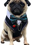 Dog Wedding / Outfits for your dog to wear at your wedding