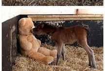 söta hästar