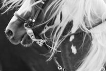 Equestrian Obsession! / by Kimberly Grigg