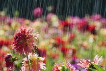 Rains and Water Drops