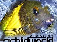 African Cichlids - Tanganyika & Malawi