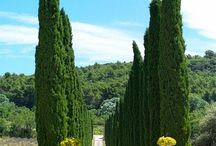 entrances