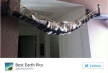 Bydlím u své kočky