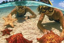 Local Attractions - Cayman Islands / So much to see and do here! Explore and let the culture fill your soul.