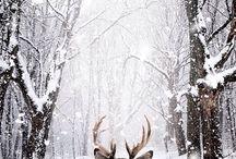 Inspiration Hiver - Winter Inspiration