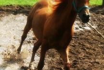 My horse and Quotes<3