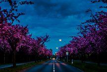 Пейзажи\Природа\Город
