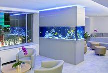 Fish and aquaria