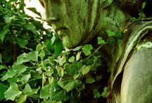 English Ivy and Moss