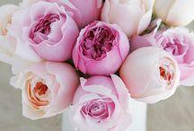 pink / by Maggie Callander
