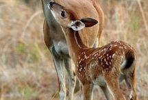 Moose's &Deer's